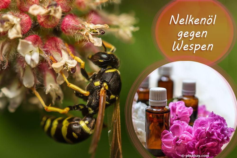 Nelken gegen Wespen