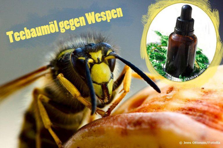 Teebaumöl gegen Wespen