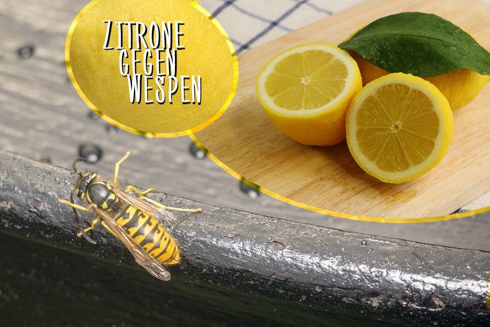 Zitrone gegen Wespen