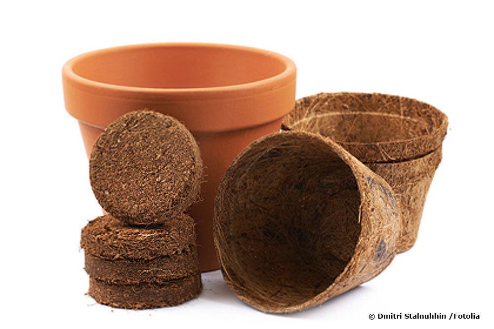 Kokos Quelltabletten zur Anzucht