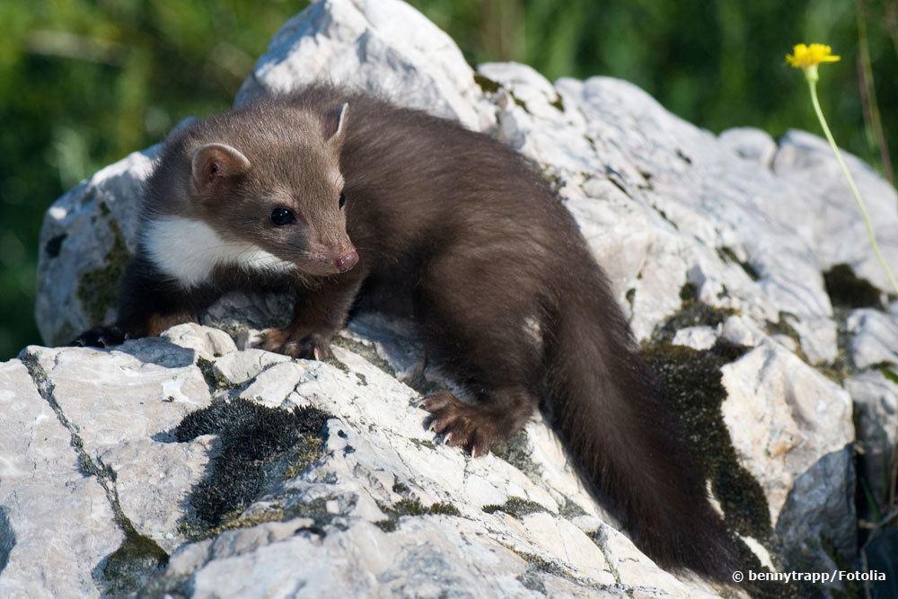 eichhörnchen kot bilder