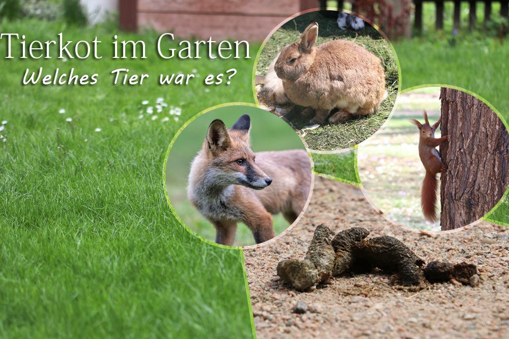 Kot Im Garten Welcher Tierkot Sieht Wie Aus Tiere Erkennen