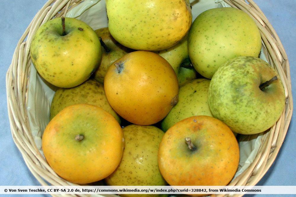 Apfelsorte 'Ananasrenette'