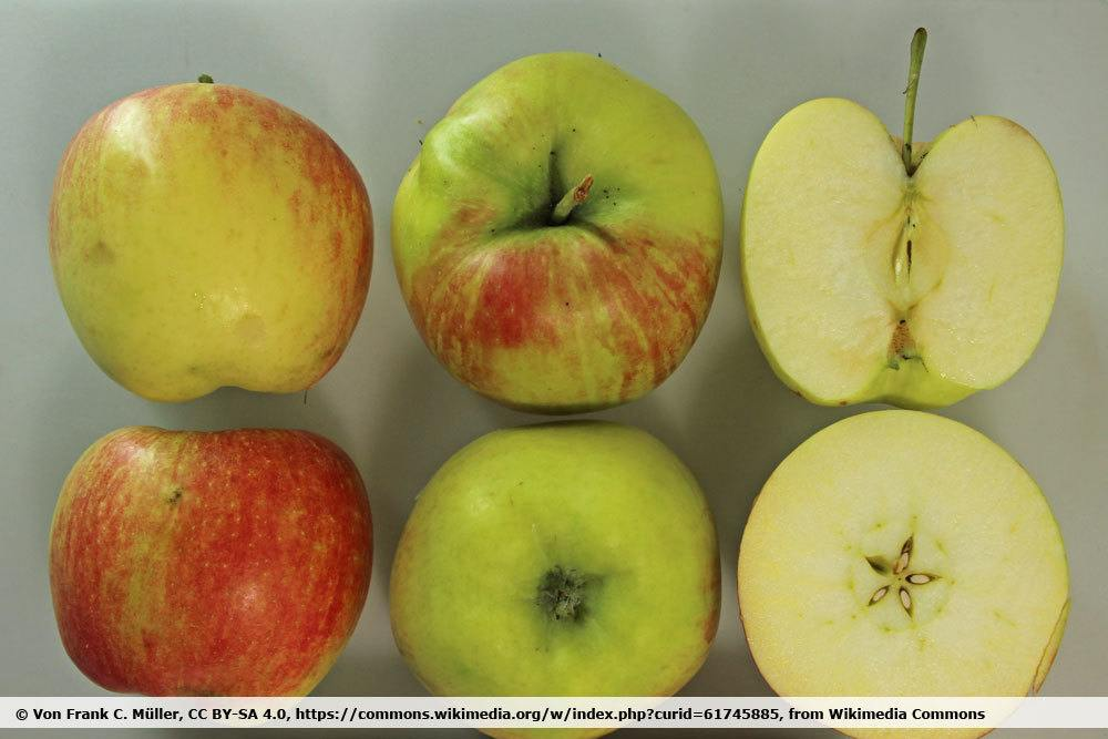Apfelsorte 'Delbarestivale'