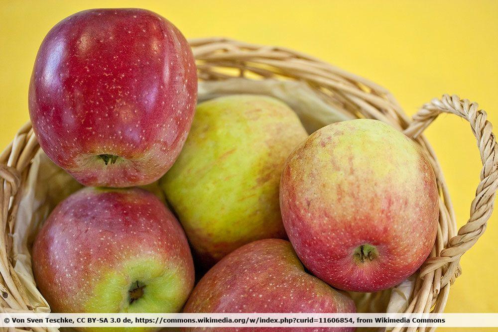 Apfelsorte 'Florina'