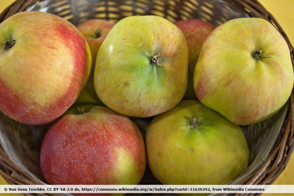 Apfelsorte 'Jamba'