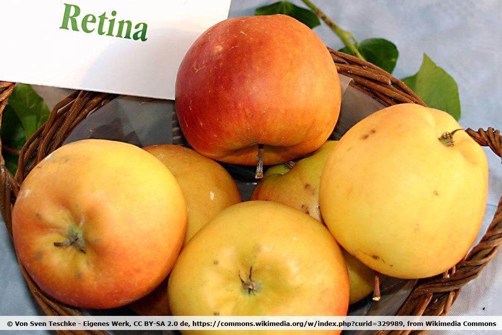 Apfelsorte 'Retina'