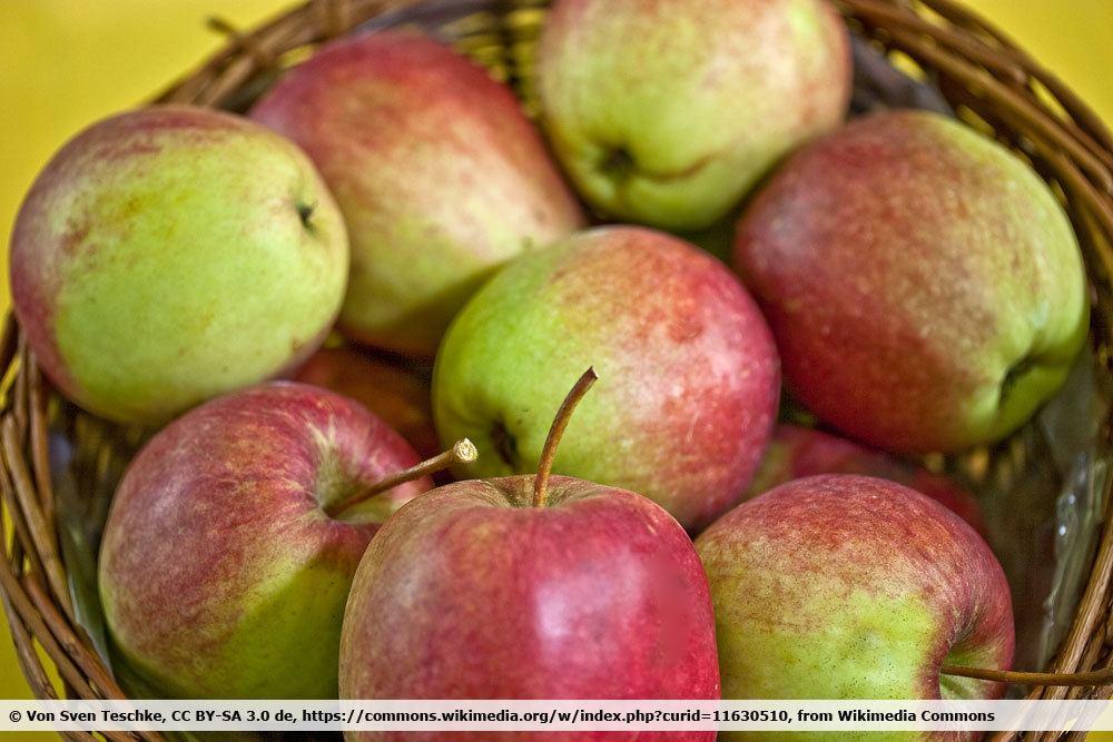 Apfelsorte 'Rewena'