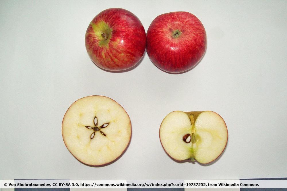 Apfel 'Schöner aus Bath'