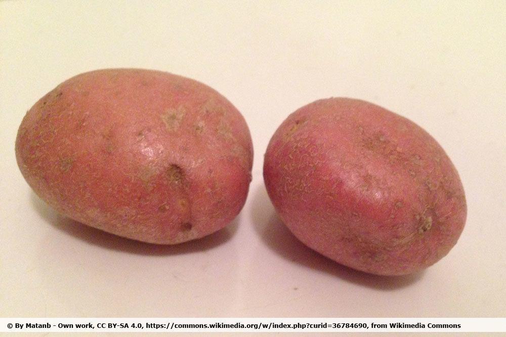 Kartoffelsorte Asterix