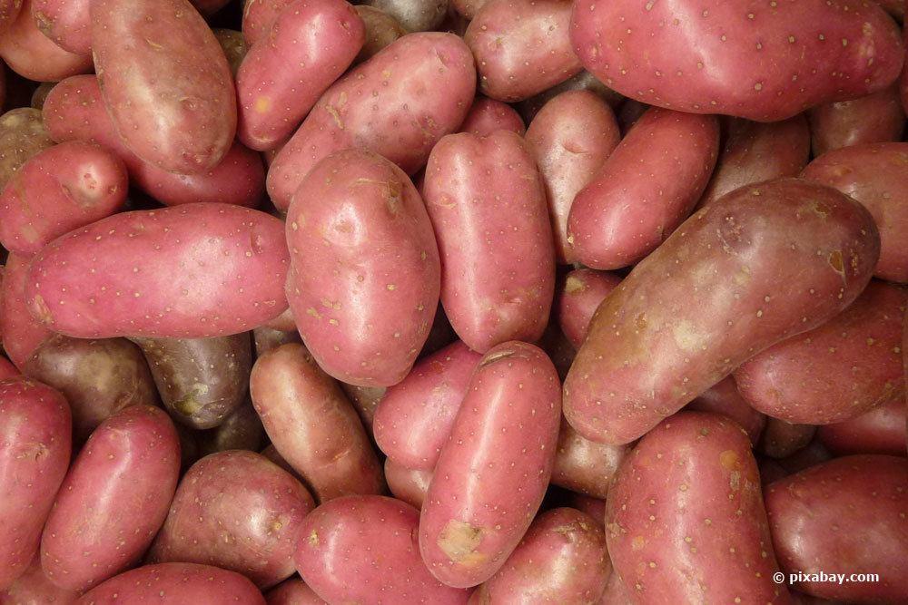 rotschalige Kartoffel 'Cherie'