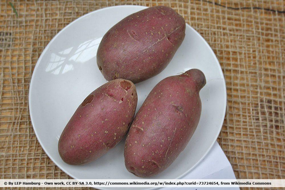 Kartoffel 'Heiderot'