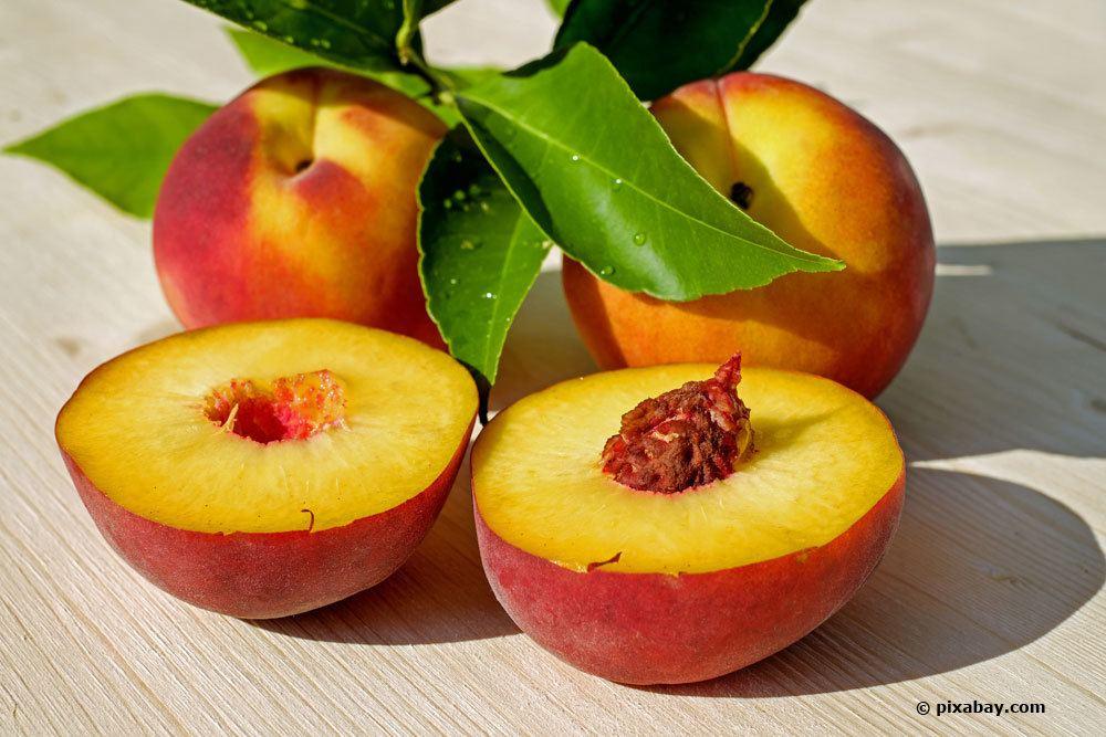Prunus Persica, Pfirsich 'Dixired'