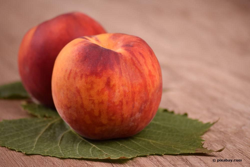Prunus Persica, Pfirsich 'Starcrest'