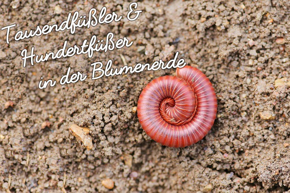www.plantopedia.de