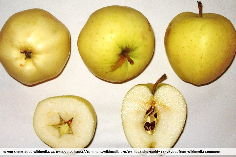 'Weißer Klarapfel'