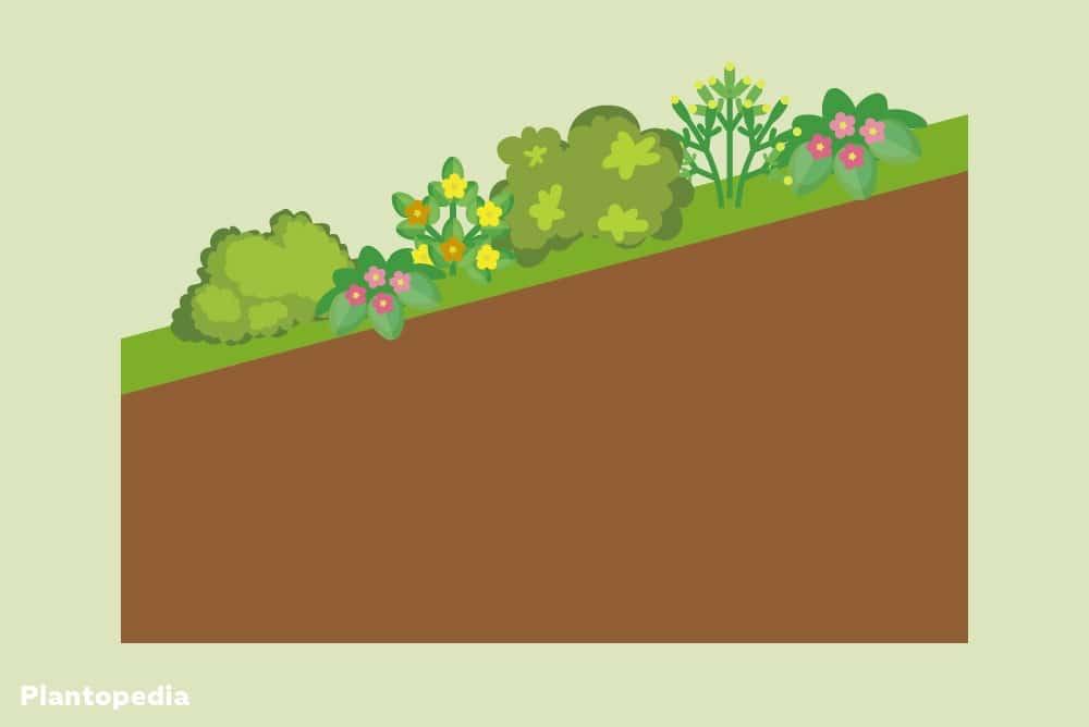 Bepflanzung zur Hangbefestigung
