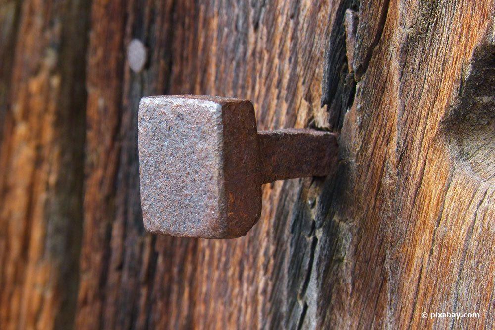 Kupfernagel im Baum