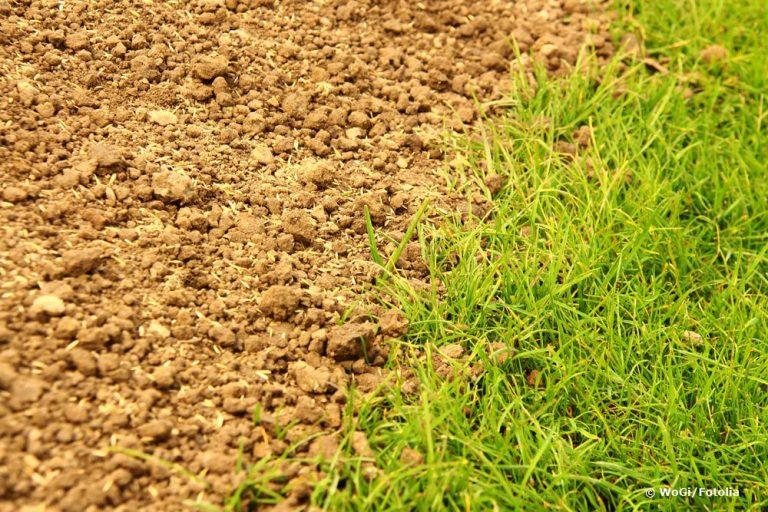 Mutterboden auf alten Rasen ausbringen