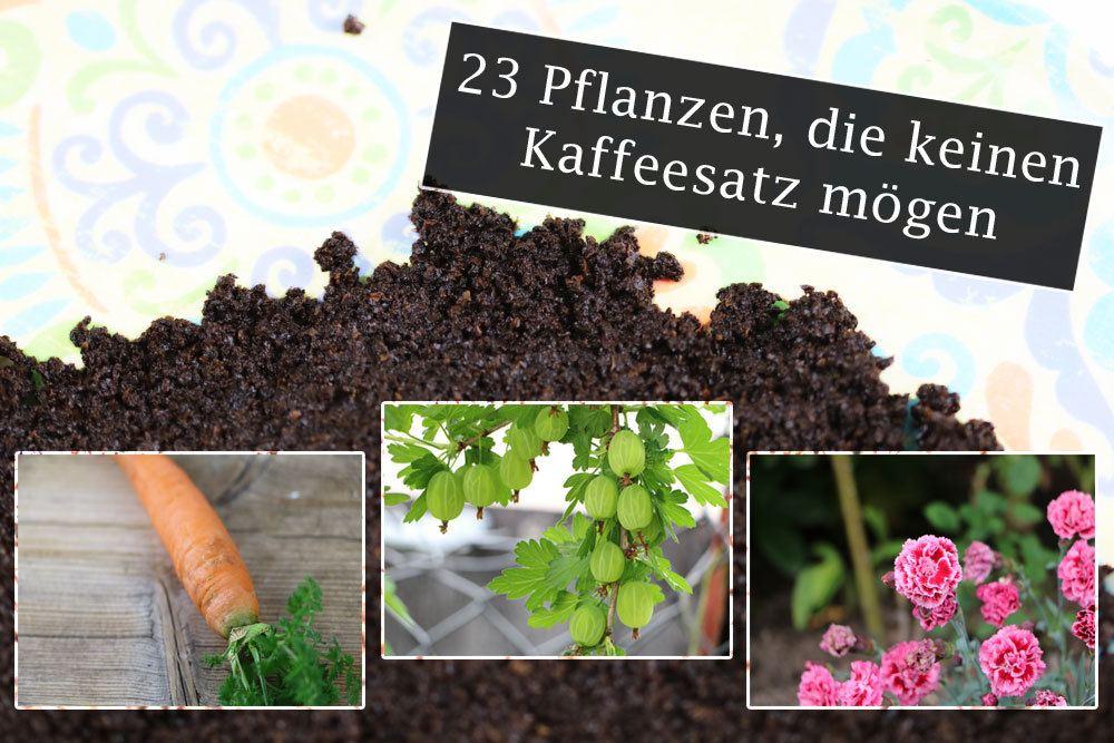 Pflanzen ohne Kaffeesatz
