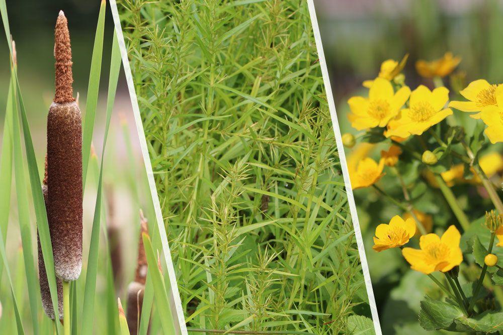 Wasserpflanzen im Gartenteich