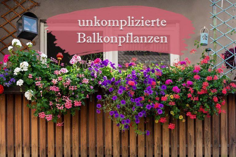 unkomplizierte Balkonpflanzen