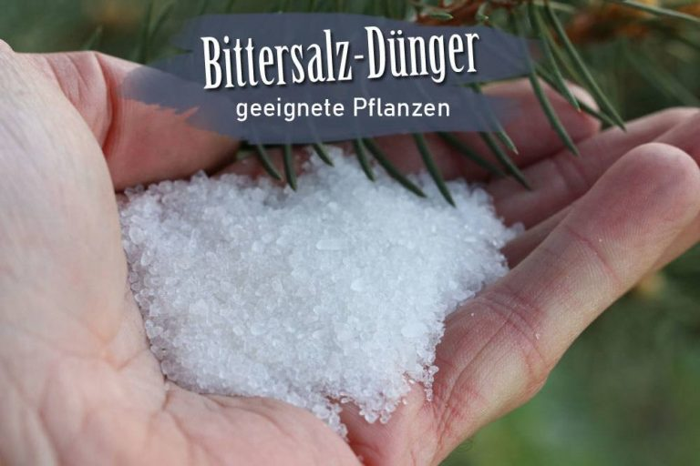 Bittersalz Dünger