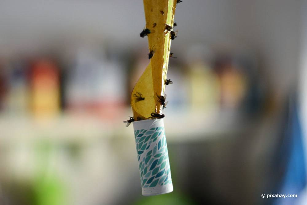 Klebefalle für Fliegen