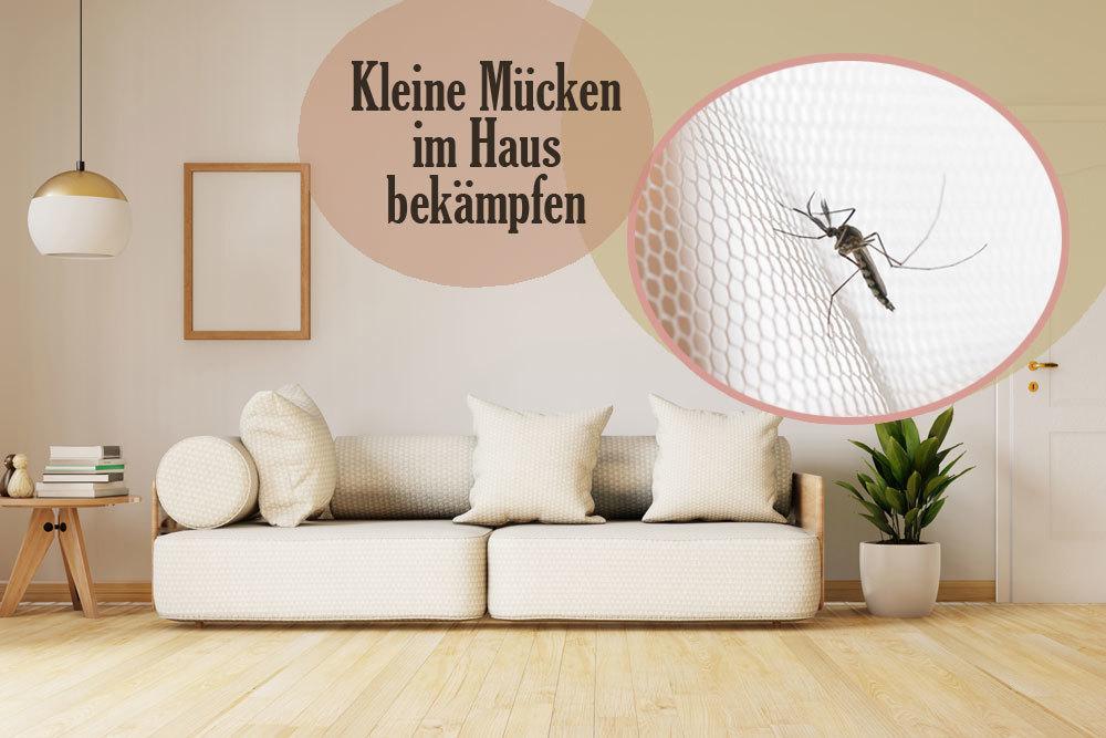 Kleine Mücken im Haus
