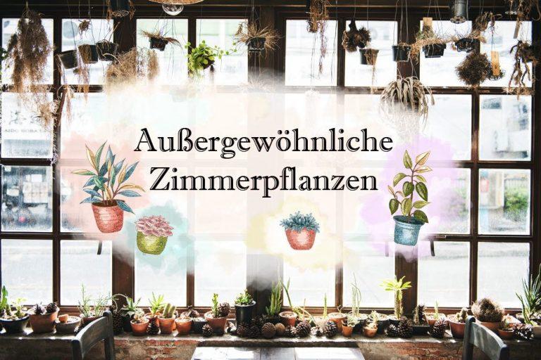 Außergewöhnliche Zimmerpflanzen