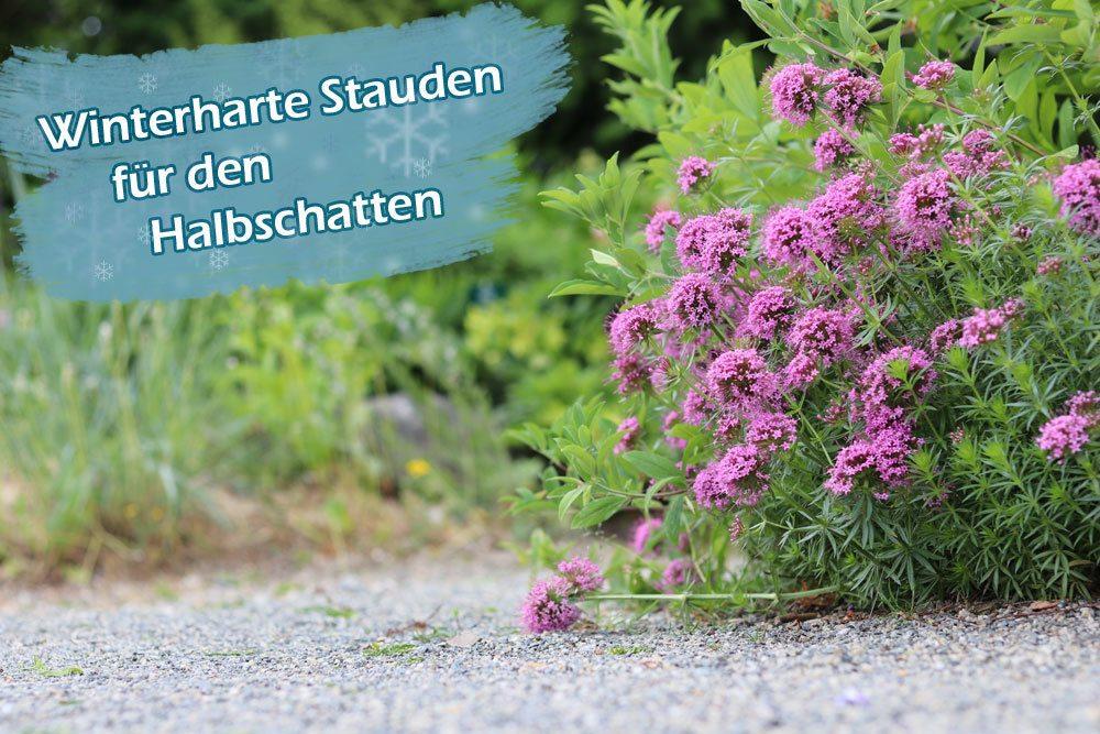 Pflanzen Halbschatten