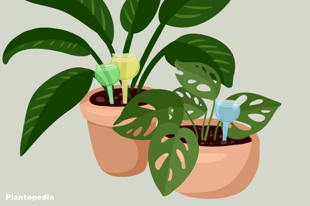 Gießkugeln zur Pflanzenbewässerung