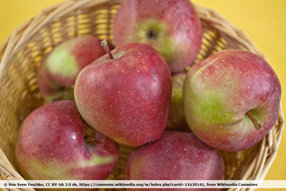 Apfelsorte Gloster