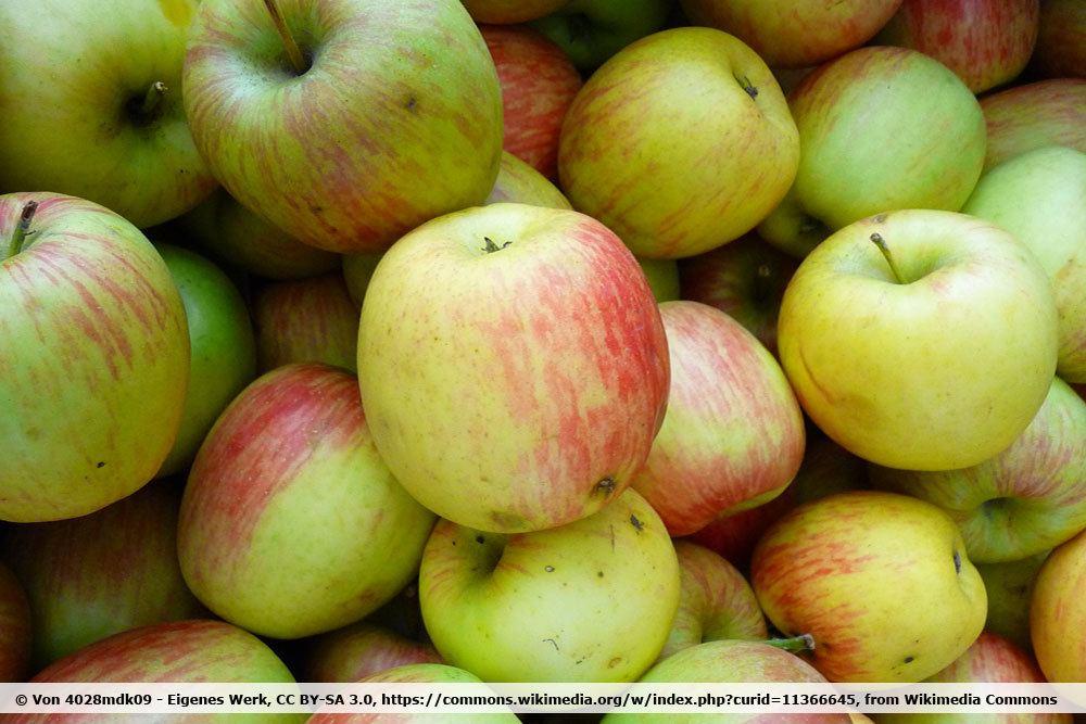 Apfelsorte Delbarestival