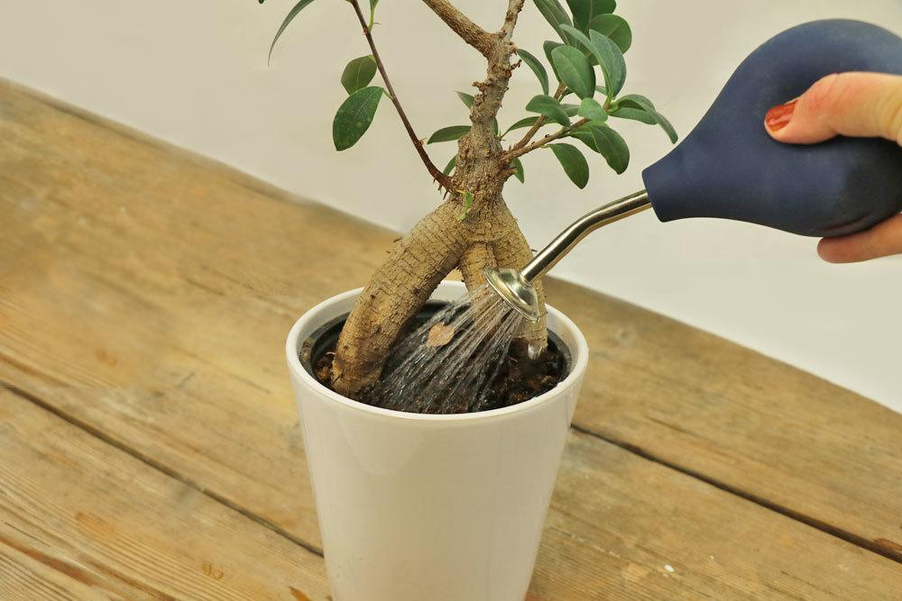 Bonsai Gießkanne