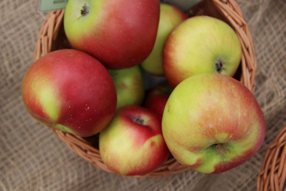 Brettacher Apfel