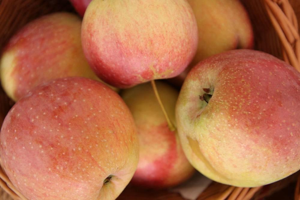 Florina ist eine süße Apfelsorte