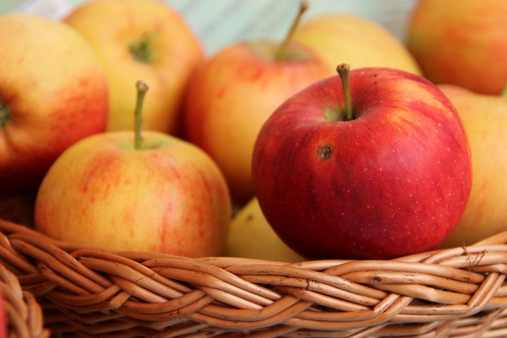 Gerlinde Apfel