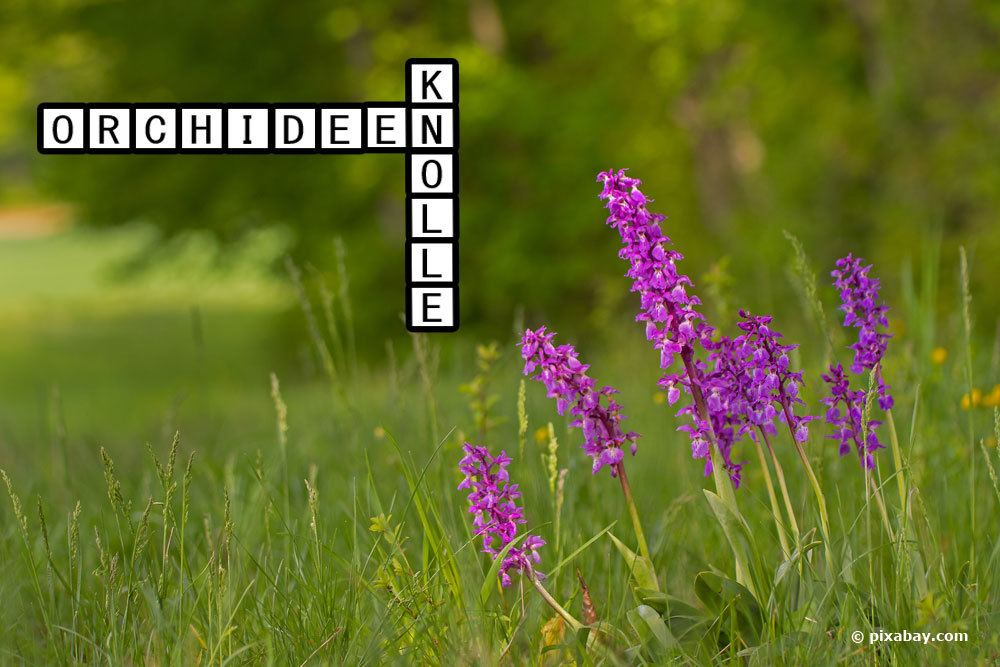 Zimmerpflanzen Kreuzworträtsel