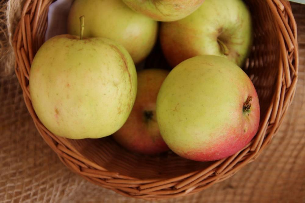 Apfel Relinda