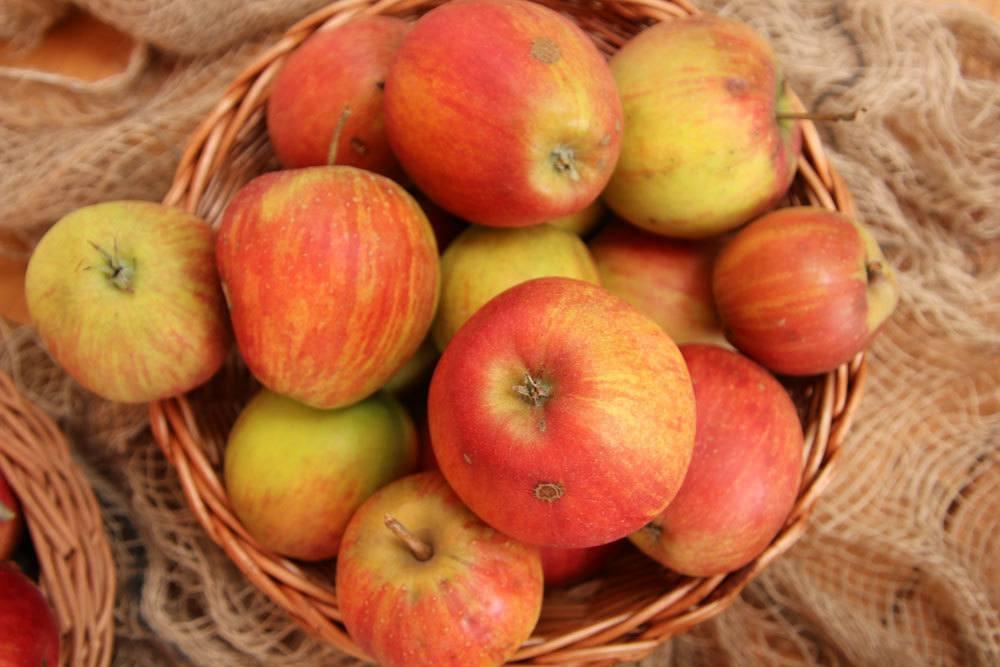 Apfel Rubinette