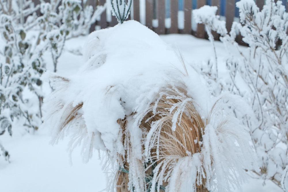 Schneelasten entfernen zählt zu den Gartenarbeiten im Winter