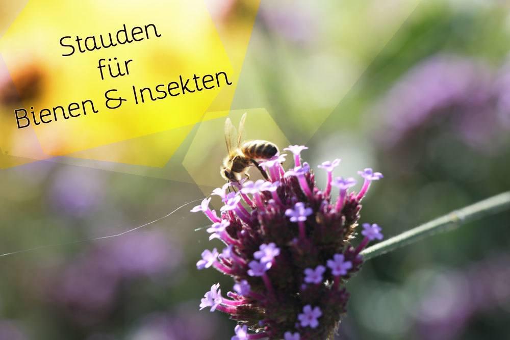 Stauden für Bienen und Insekten