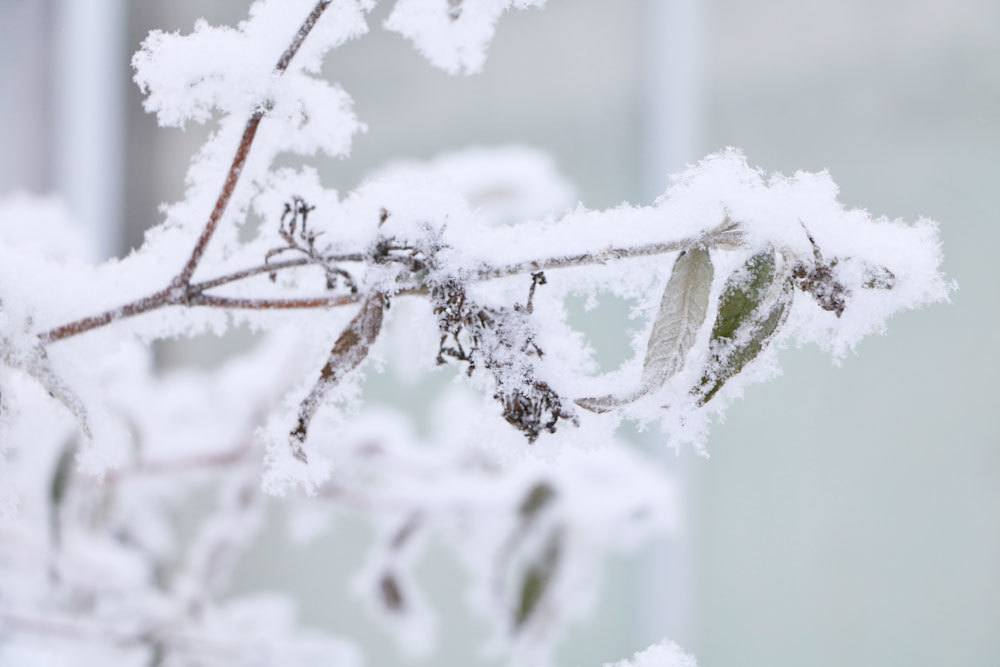 Gartenarbeiten im Winter