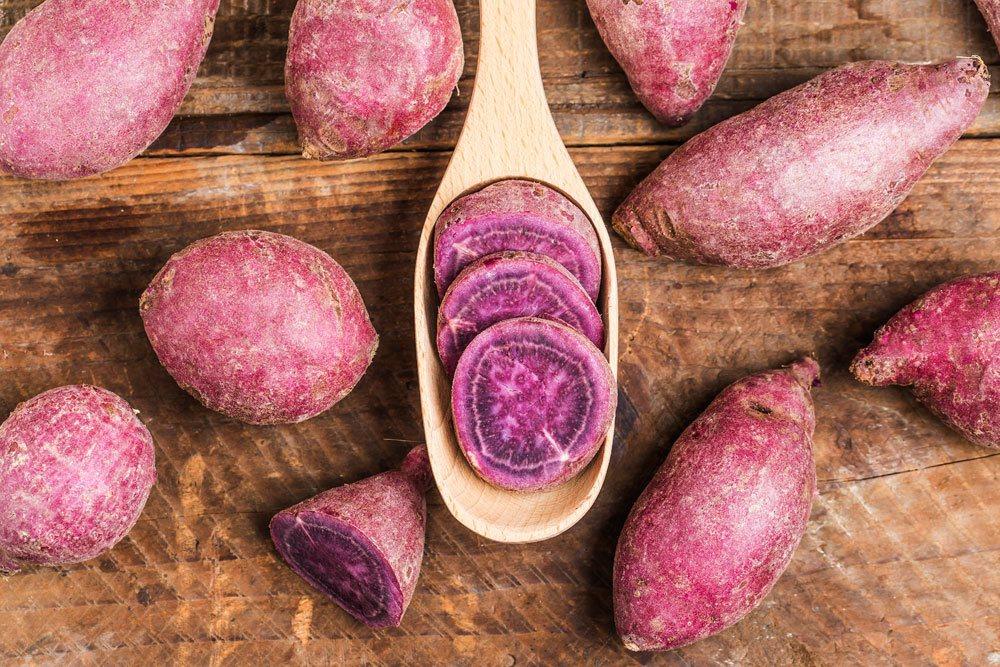 lila Süßkartoffel, Ipomoea batatas