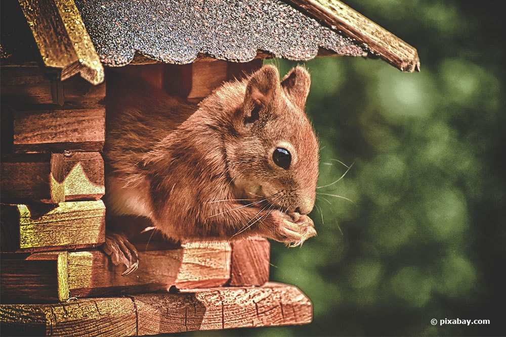 Eichhörnchenfutter