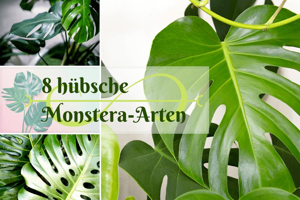 Monstera-Arten