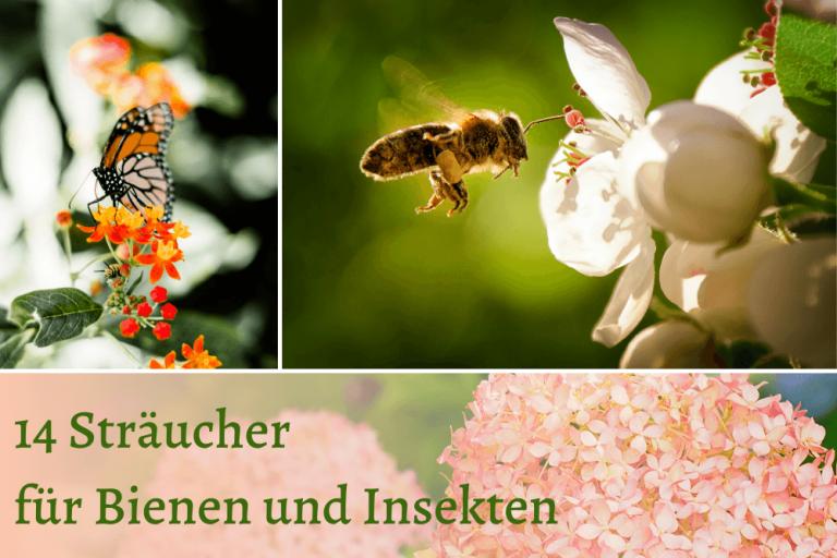 Sträucher für Bienen