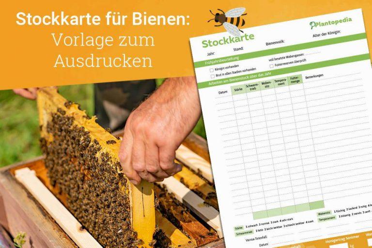 Stockkarte für Bienen