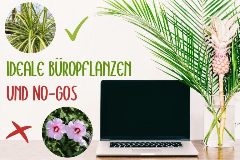 ideale Büropflanzen